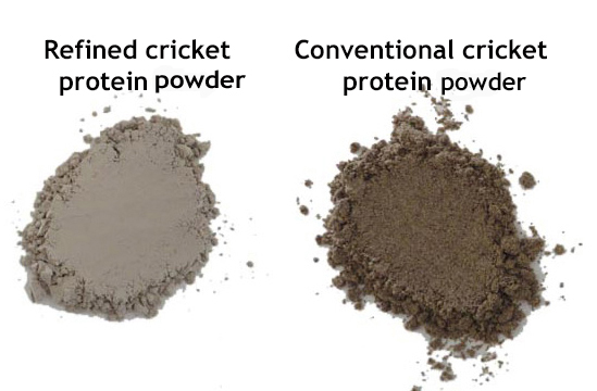 refined vs convention cricket protein powder